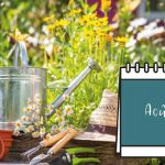 Calendrier Jardin Aout