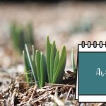 Calendrier Jardinage Avril