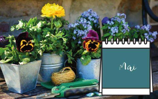 Calendrier Jardinage Mai