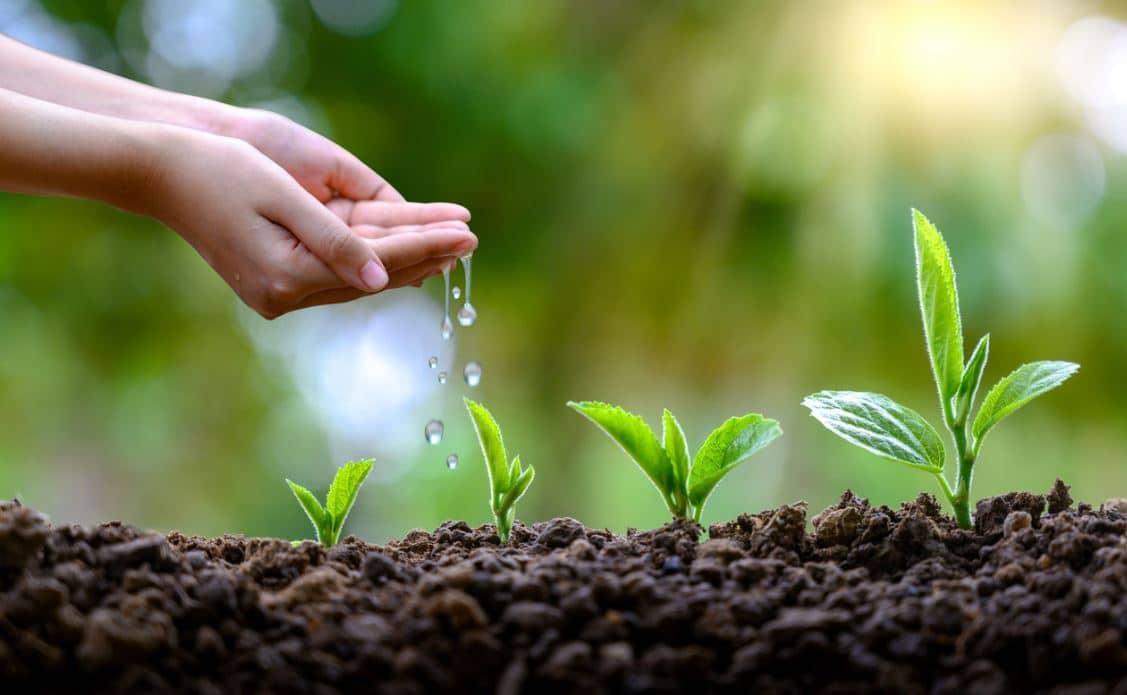 Facteur Eau Plantes