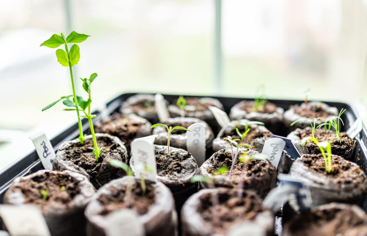 Jardinage Semis