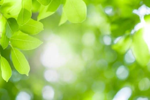 Plante Lumière