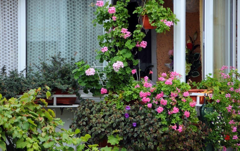 Plantes Ornementales Balcon