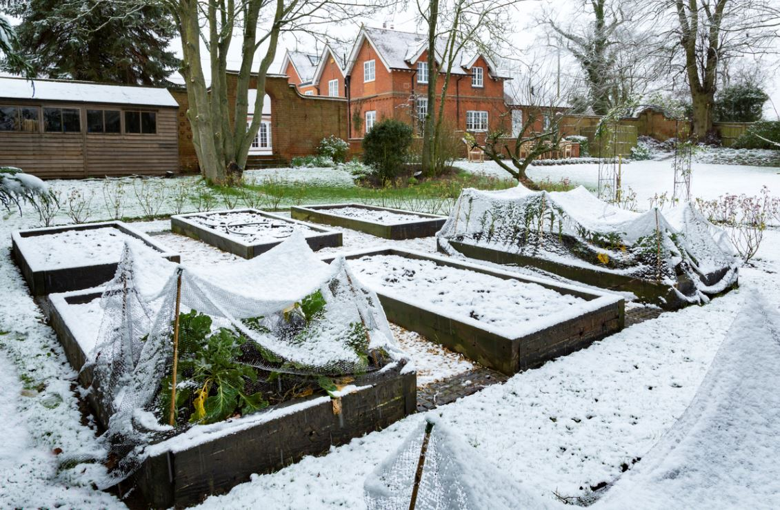Potager Hiver Neige