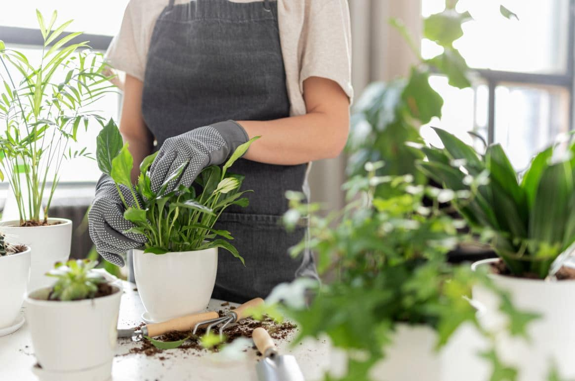Rempoter Plantes