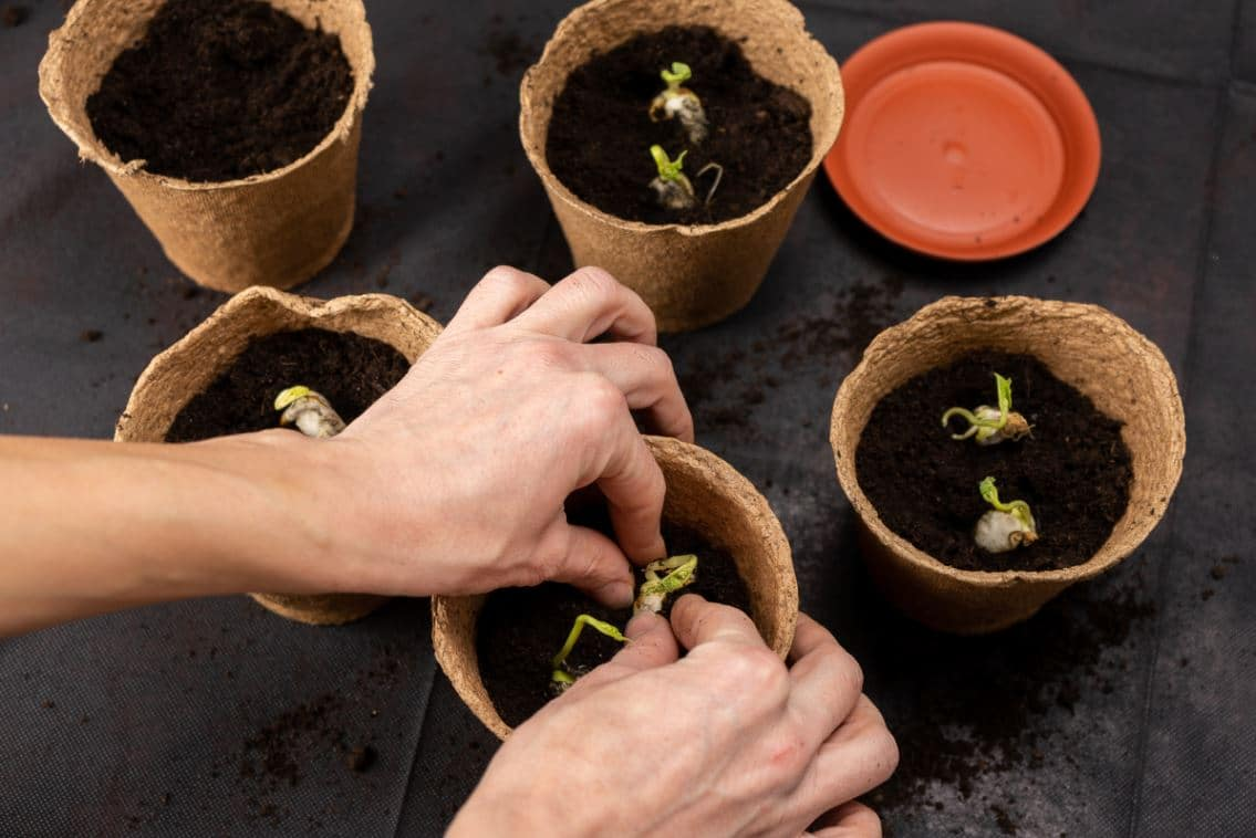 Réussir Boutures Plantes