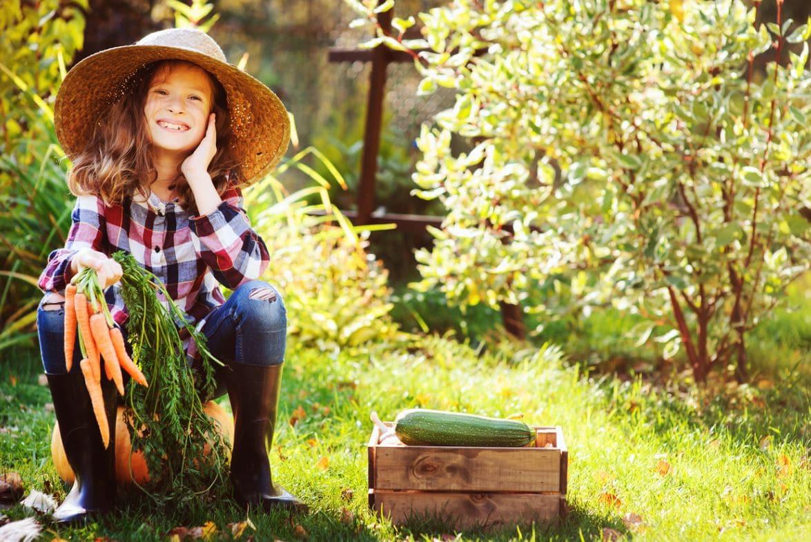 Septembre Jardin Récoltes