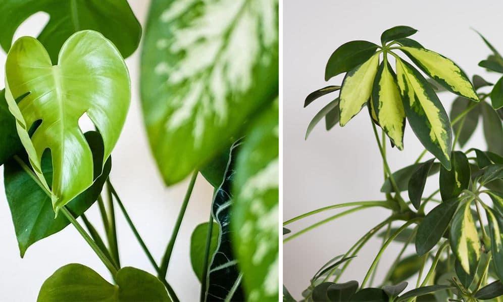 Plantes Pas Besoin D'eau