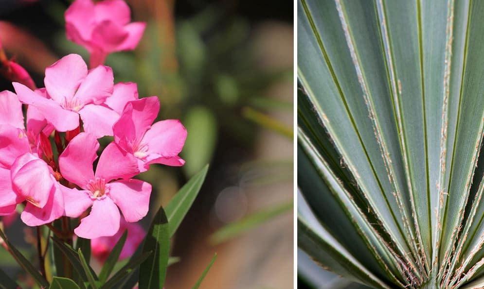 Plantes Résistante Chaleur