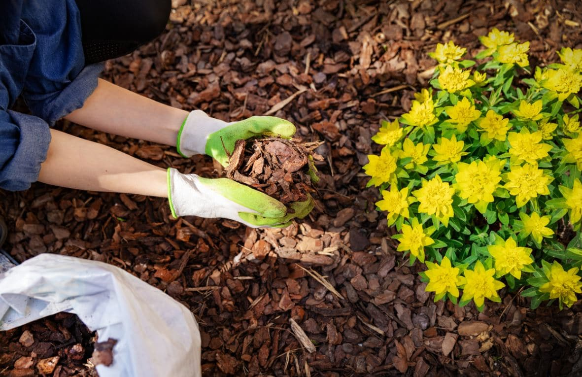 Paillage Organique Au Jardin
