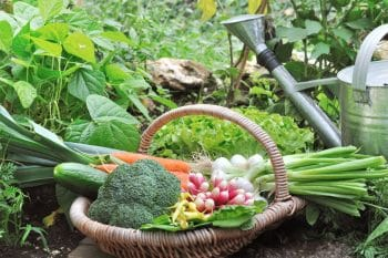 Légumes Jardin