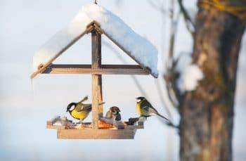 Nourrir Oiseaux En Hiver