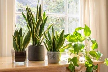 Picture Plantes Vertes Pourquoi Contribuent Elles A Notre Bien Etre