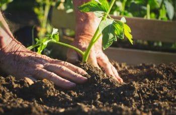 Plantation Légumes Potager