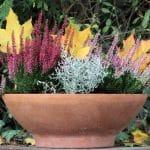 Plantes Balcon Hiver